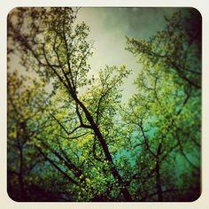 :: 21 avril 2013, Parc Monceau, Paris - Claire Guigal ::