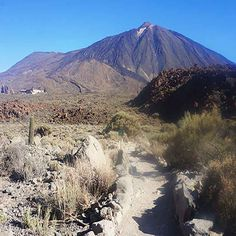 Most people will know the Canary Islands for the white sand beach resorts. However there are 4 surprising facts about the Canary Islands you should know. Canary Islands, White Sand Beach, Beach Resorts, Mount Rainier, Facts, Mountains, Nature, Travel, Naturaleza