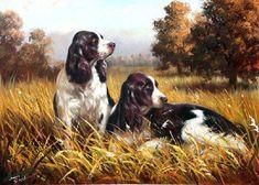 Black And White Dog, White Dogs, Dog Wallpaper, Animal Wallpaper, Brown Labrador, English Springer Spaniel, Free Dogs, Hunting Dogs, Pet Store