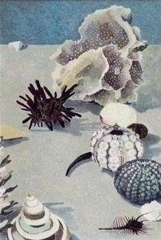 imagehandler.ashx 235×350 pixels Cressida Campbell Contemporary Australian Artists, Contemporary Art, Jonas Wood, Shell Game, Watercolor Fruit, Woodblock Print, Jellyfish, Seaweed, Gravure