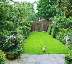 A long, thin garden with plenty of room for puppy to play and lots of privacy from the neighbours.