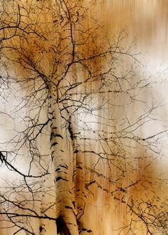 by Peter Holme III #tree #art