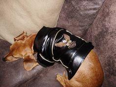 Jaqueta Haley Davidson Para Cachorros Caes Pets