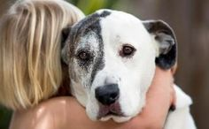 A sad looking dog is hugged by a child
