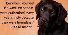 Rescue, Foster, Adopt & please do not forget to spay & neuter all of your pets, that way we can find loving homes for those already here Animal Shelter, Animal Rescue, Shelter Dogs, Shelters, Animals Beautiful, Cute Animals, Stop Animal Cruelty, All About Animals, Animal Rights