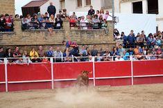 Santacara: Vacas Ustárroz Día de las Bardenas (9) Wrestling, Cows, Siblings, School, Lucha Libre