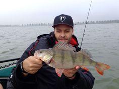 Barsch Teammeeting Predator, Fish, Pisces