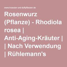 Rosenwurz (Pflanze) - Rhodiola rosea | Anti-Aging-Kräuter | Nach Verwendung | Rühlemann's Kräuter und Duftpflanzen