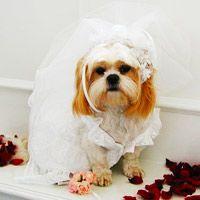Couture White Wedding Dog Dress