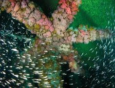 Fish love skyscraper-style living under oil platforms - life - 13 October 2014 - New Scientist