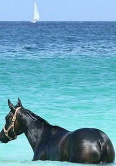 Blue, aqua ocean, black horse