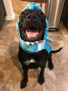 She loves shark week