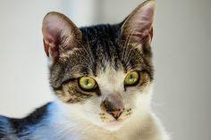 Animal, Gato, Close Up, Felino