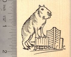 Amazon.com: Giant Capybara Rubber Stamp: Arts, Crafts & Sewing
