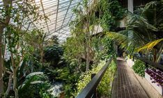 barbican conservatory // london