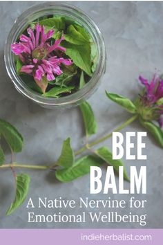 Using Bee Balm for Emotional Wellness | indieherbalist