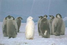 белая ворона фото птицы: 5 тыс изображений найдено в Яндекс.Картинках