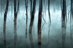 Cold and misty by Gheorghe Popa
