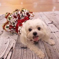 Vestido de Navidad para perro perro perro por LittleDogFashion