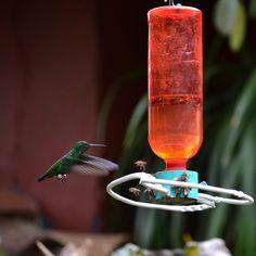 Mi foto en Instagramers Gallery #nature #colibrí #bird