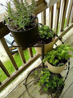 So beautiful  Herb Gardened / http://www.everydaygardening.net/herb-gardened/