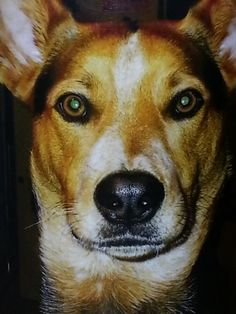 Parents Name: Linda Pets Name: Princess Pet Species: Dog Pets Favorite thing to do: going for rides in the car with her mama Eulogy: 12 years ago my boys and i rescued a sweet blue heeler mix puppy...