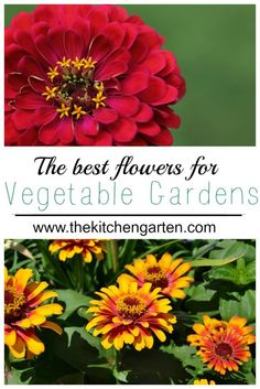 Gardens aren't just for vegetables; flowers work hard in the garden and provide beauty. It's a win-win!