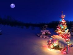 It's easy to get this look in Alaska.  Big, colored Christmas lights on the spruce trees outside.