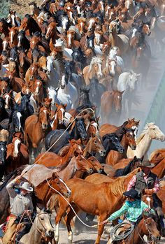 Image from the Great American Horse Drive, Sombero Ranch, Craig, Colorado USA. Michael Huggan Photography.