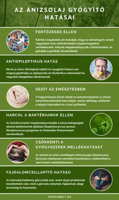 Az ánizs terméseiből vízgőz- vagy gőzdesztillációval kinyert ánizsolaj hatása antimikrobiális, nyákoldó, görcsoldó. Doterra, Essential Oils, Therapy, Herbs, Medical, Wellness, Healthy, Aromatherapy, Medicine