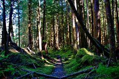 The Olympic National Park in the Pacific North-West, United States.