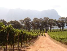 The wines of Thelema Mountain Vineyards, Stellenbosch, South Africa