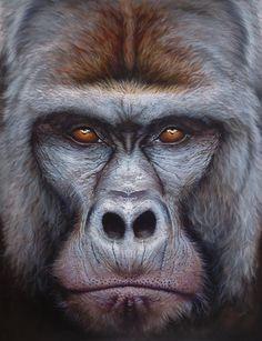 Gorilla Gorilla Beringei - Mountain Gorilla Print - Limited Edition - product image