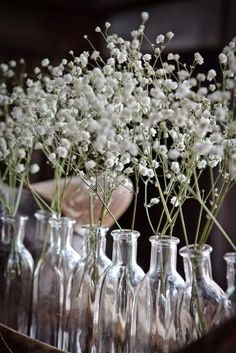 Centerpiece (or table #) idea: might try to get the baby's breath inside the bottles, submerged.