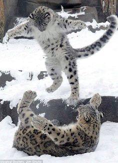 Snow Leopards Victor ReznovSnow Leopard Trus