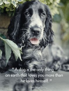 16 Dog Quotes That Will Melt Your Heart - Nora Ephron