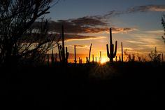 PHP_0619  Tucson Mountian Park Sunset www.phawkinsphoto.com Peter Hawkins©2014  500px