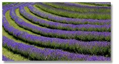 Lavendel, Greith bei Kitzeck Stone, Outdoor Decor, Pictures, Lavender, Tips, Rock, Stones, Batu