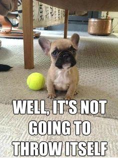 my dog looks at me like im crazy igf i don't throw his ball.
