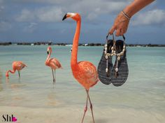 Summer collection, made in Aruba Island