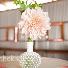 dahlias and antique glassware. freaking love it.
