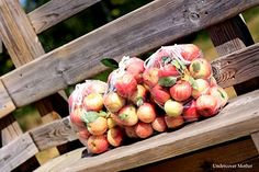 All Seasons Orchard {Woodstock}