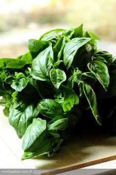 Pesto Sos | Mutfak Sırları – Pratik Yemek Tarifleri