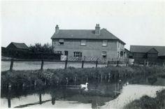 Waterside Farm - Canvey Island - Henry Clubb - c1925