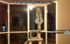 A Dog Adjusting To Cat Owners