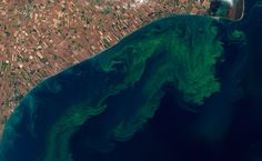 algae-algal-bloom-lake-erie-nasa