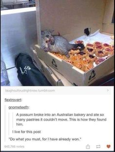 That's a possum??? It's looks nice!! Not evil like the ones we have here in America!!!