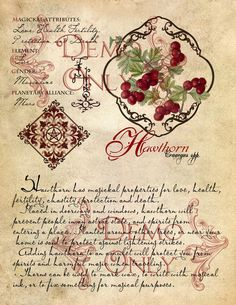 Grimoire, Spell, Herbal, and Book of Shadows Pages, Practical Magic; The Cackling Cauldron Book of Shadows ~ Enchanted wood Page Set Wiccan Spells, Magick, Witchcraft, Wiccan Magic, Magic Herbs, Herbal Magic, Witches Cauldron, Witches Brew, Enchanted Wood