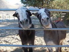 Urgent Help Needed by Senior Burro Sanctuary in Olancha, California (PHOTOS)
