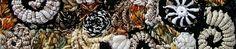 Quick Freeform Tutorial for Knitting and Crocheting   Renate Kirkpatrick's Freeform Crochet~Knit~Fibre Designs
